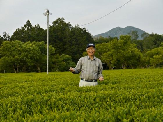 Iwao Hayashi in seinem Teegarten