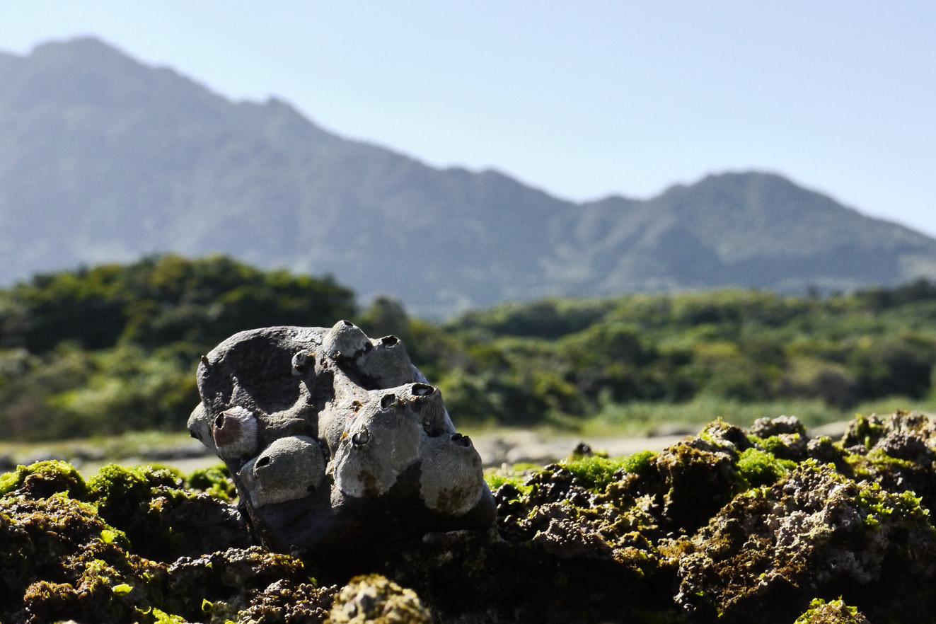 La fabuleuse île de Yakushima - vue de la côte jusqu'aux montagnes