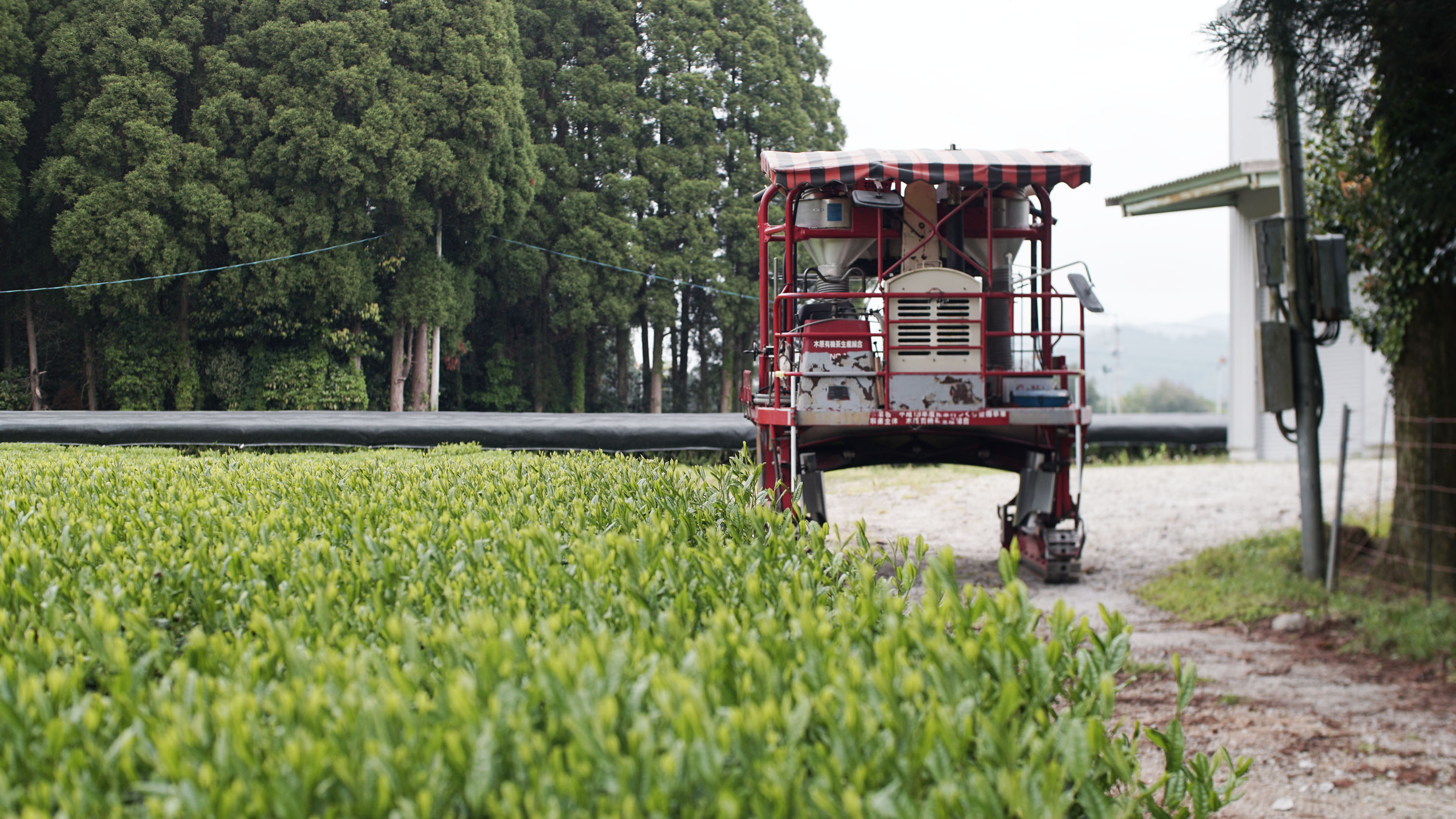 La récolte du KIRISHIMA ARACHA SHINCHA est terminée, la moissonneuse se tient maintenant à côté du site de traitement de Shutaro Hayashi et attend la prochaine mission (Photo : Arun Herzog).
