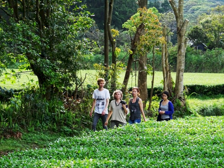 In the tea garden of Mr. Watanabe: Marimo together with two customers (tea shop owners from Paris and Tours)